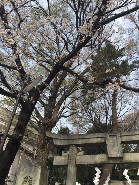 桜まつり!